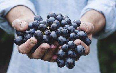 Formation complète en Viticulture