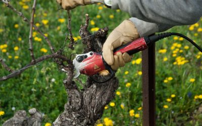 Taille et Entretien des Vignes et Espace Rural